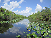 Slough with spatterdock plants in Everglades National Park, Florida. Nice reflection of clouds in the water!
