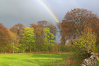 Rainbow on a wet spring day over beech trees