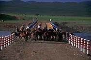 Mongolia. cattle breeders , horse rider; landscapes yurt ans steppe in Bat ulzii area  Orkhon valley / nomades et cavalier. steppe et yourtes .   region de  Bat Ulzii  vallee de líorkhon  Mongolie