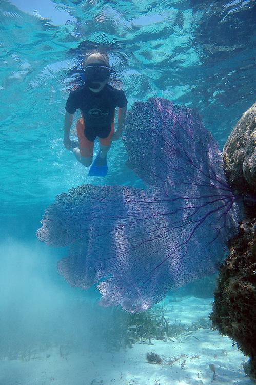 Young free diver. Location : Akumal Mexico