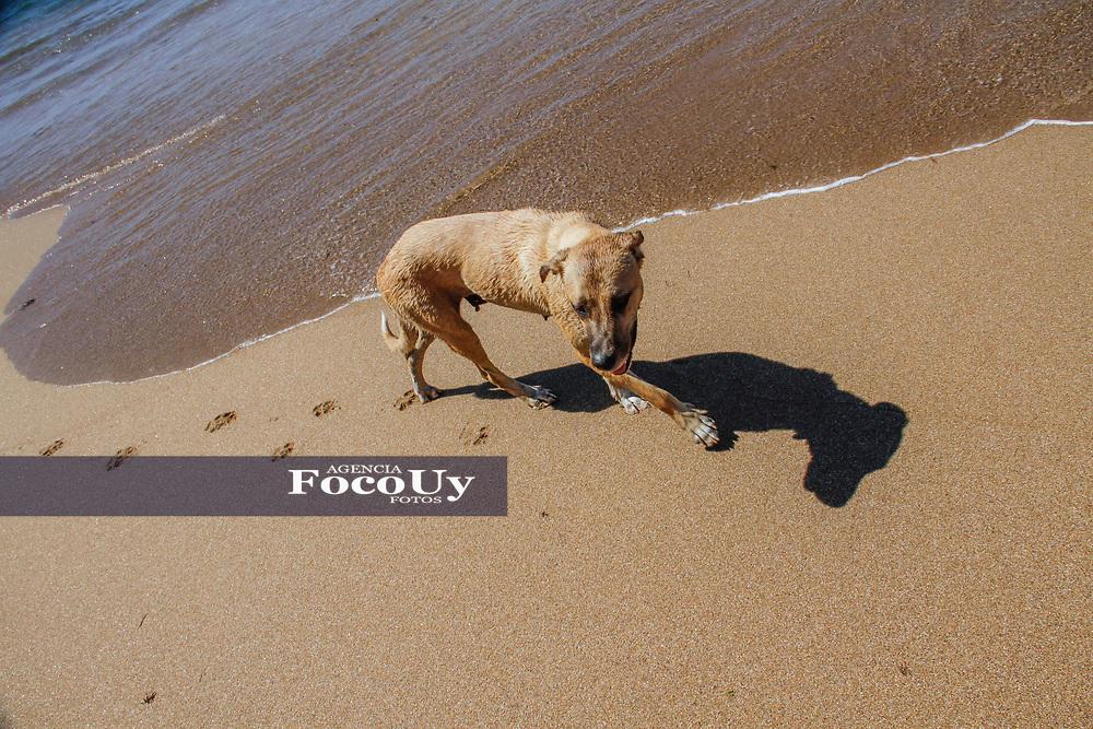 Rocha,  Uruguay. 11 de Enero de 2018.  <br /> Balneario La Paloma. Playa La Balconada.<br /> Perros en las palyas<br /> Foto: Gast&oacute;n Britos / FocoUy