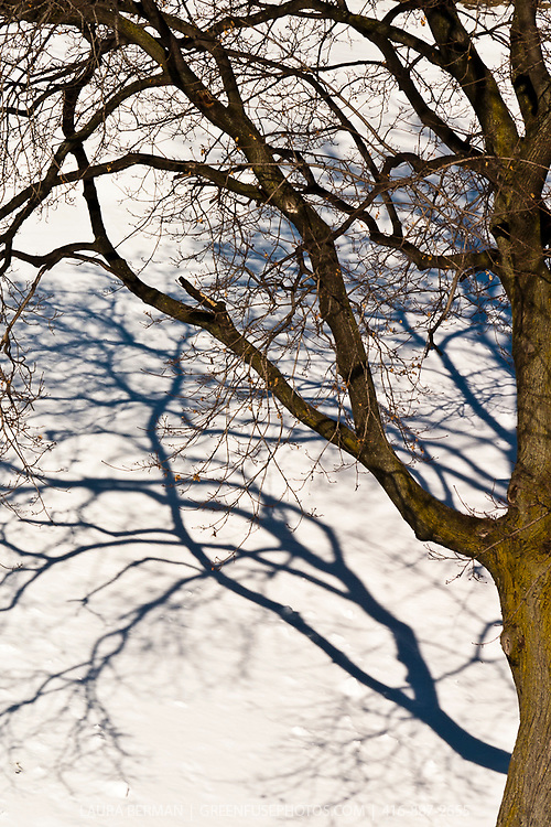 Shadows on the snow of a deciduous tree in winter.