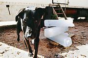 dog in van's shade, Middle East Tek, Wadi Rum, Jordan, 2008