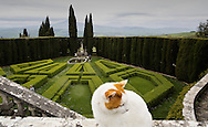 Italy, La Foce - A general view of the gardens of La Foce. The garden is a perfect example of an italian garden with its geometrical structure. It is considered among the twenty most beautiful gardens of Italy.<br /> Ph. Roberto Salomone