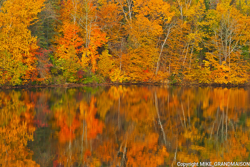 Acadian forest in autumn foliage reflected in the Saint John River <br />Mactaquac<br />New Brunswick<br />Canada