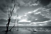 Near Engelsmanplaat, in the middle of the mudflats of the Dutch Waddenzee // Een staak bij Engelsmanplaat, een eilandje/ zandplaat tussen Ameland en Schiermonnikoog in de Waddenzee, zo'n vijf kilometer uit de Friese kust boven Nes.
