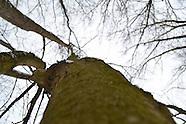 Treenapped