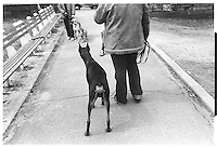 Dogs in Central Park, New York City. Street photography. 1980