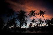 Porto Seguro_BA, Brasil...Coqueiros nas proximidades de Trancoso, Bahia...The coconut-trees near Trancoso, Bahia..Foto: LEO DRUMOND / NITRO