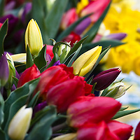 Spring tulips and daffodils.
