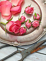 Motiv: Ätbara blombak<br /> Recept: Katarina Carlgren<br /> Fotograf: Thomas Carlgren<br /> Användningsrätt: Publ en gång <br /> Annan publicering kontakta fotografen