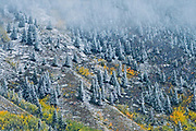 Fog and snow in autumn in the Canadian Rocky Mountains<br />