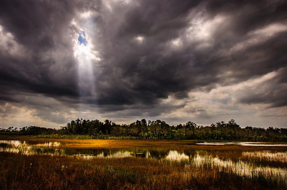 Grassy Waters Preserve 2011 Photo Contest Grand Prize Winner