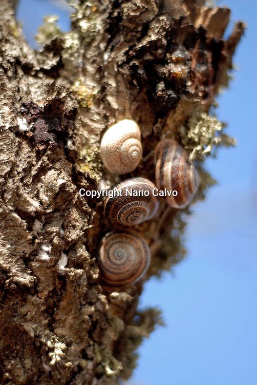 NATURAL Ibiza<br /> Fine Art Photography by Nano Calvo <br /> &copy; 2009