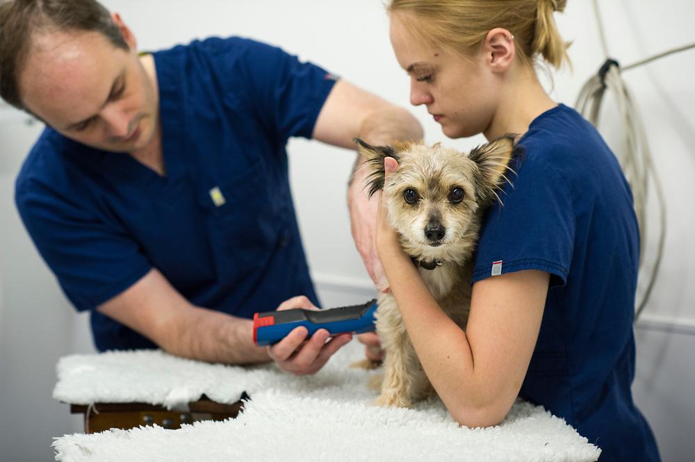 Rushcliffe Veterinary Centre, West Bridgford, Nottingham NG2 7LR.<br /> Photo: Ed Maynard<br /> 07976 239803<br /> www.edmaynard.com