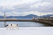 En katt str&ouml;var omkring i hamnomr&aring;de p&aring; &ouml;n Tashirojima i Japan.<br />  <br /> Tashirojima kallas f&ouml;r &quot;katt&ouml;n&quot; eftersom h&auml;r lever hundratals katter tillsammans med ca 50 personer.   <br /> <br /> Ishinomaki, Miyagi Prefecture, Japan. <br /> <br /> Fotograf: Christina Sj&ouml;gren<br /> Copyright 2018, All Rights Reserved