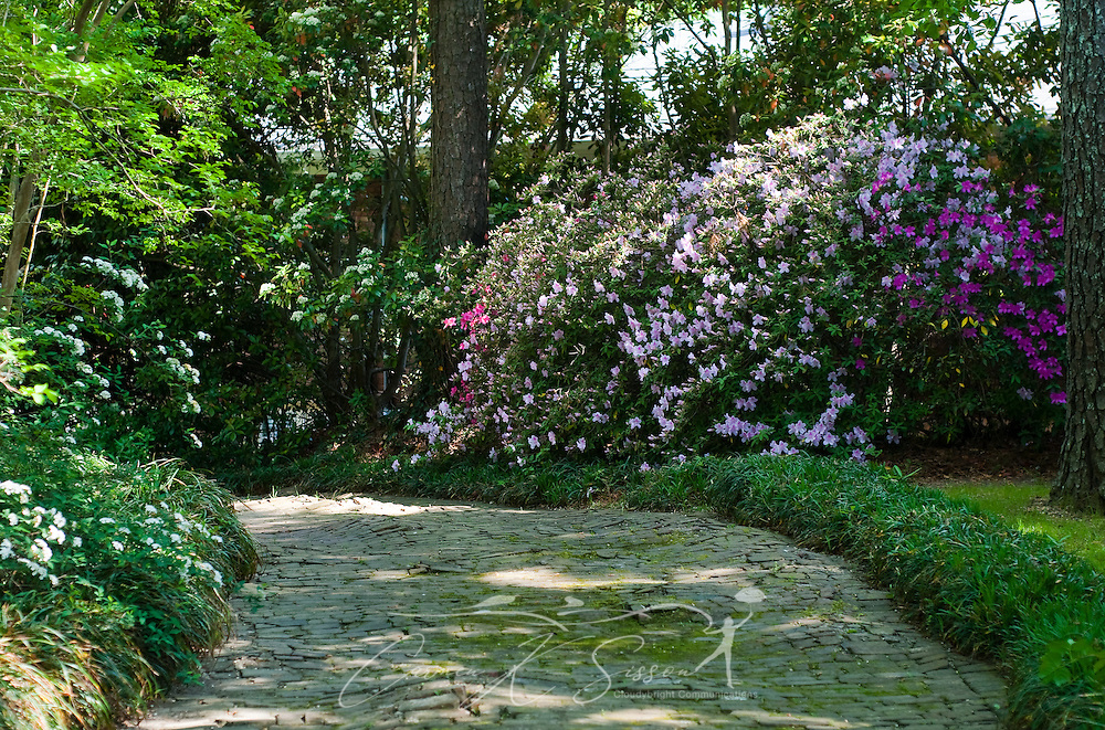 Pink azaleas line a shady path in the gardens of Rosewood Manor in Columbus, Miss. April 16, 2010. The Greek-Revival antebellum home was among nearly two dozen on tour during Columbus' annual Spring Pilgrimage. (Photo by Carmen K. Sisson/Cloudybright)