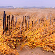 Dune grasses blowing in the wind and an old snow fence on Popham Beach, Maine