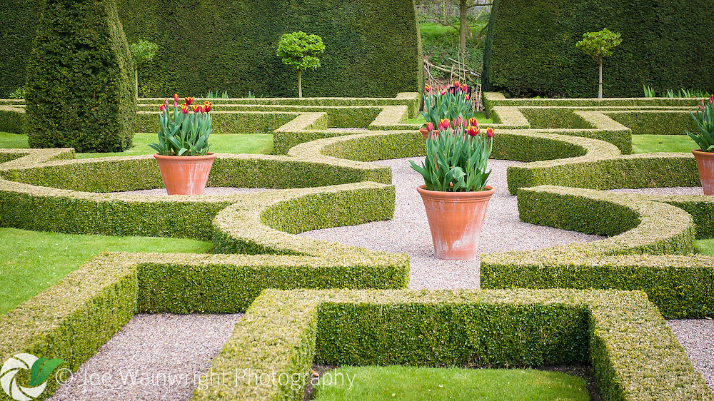 The Knot Garden at Little Moreton Hall, a 15th century, timber-framed moated manor house near Congleton, Cheshire.  It was planted in the 1980's based on a design from Meager's Complete English Gardener, which was published in 1672.