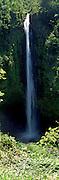 Waterfall in a forest, Akaka Falls, Akaka Falls State Park, Big Island, Hawaii, USA