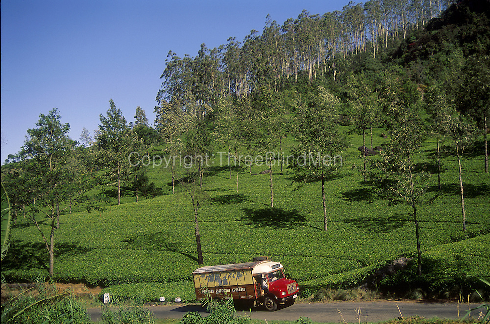 Tea Estate with lorry