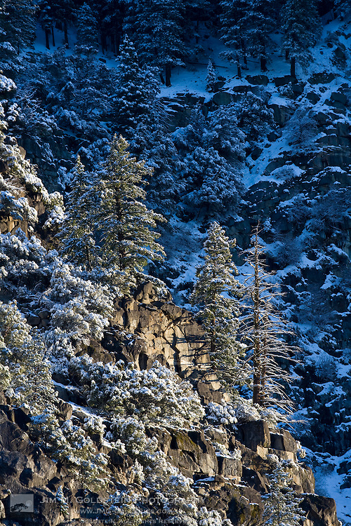 Early morning sun shines on ice and snow covered granite & pine trees at the top edge of Yosemite valley - Yosemite National Park, California