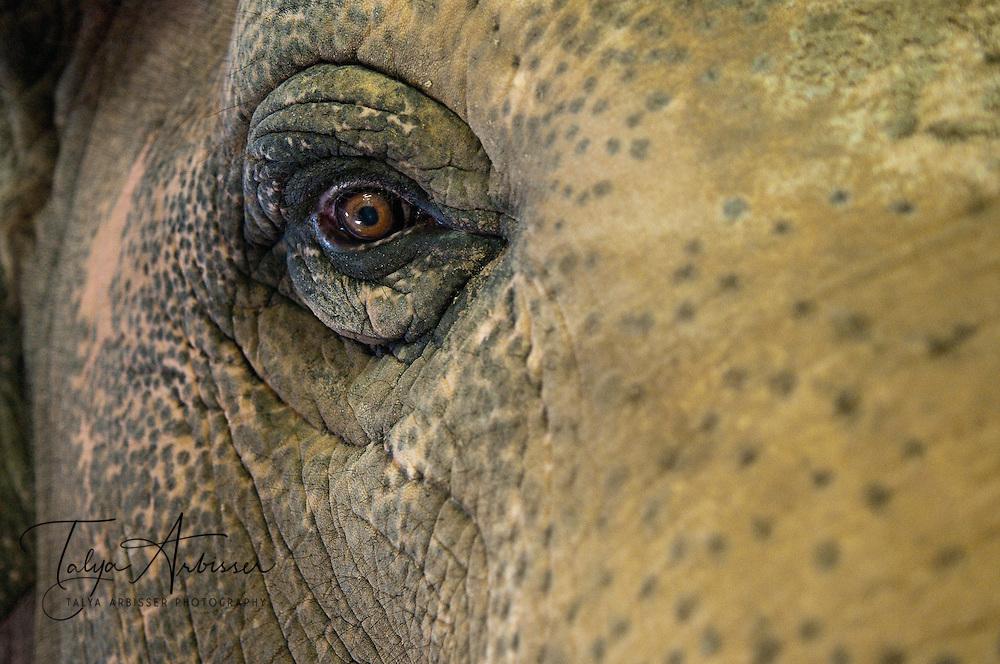 Elephant's Eye - Coal Valley, IL