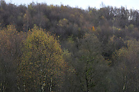 autumn woodland on a moorland hillside. Black Coppice, Lancashire.