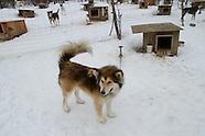 Winter Dogs