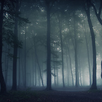 Dark mysterious Transylvanian forest with fog at night