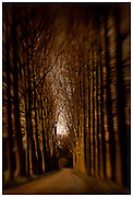 Avenue of Trees, Wassenaar, Netherlands. Lensbaby 2.0