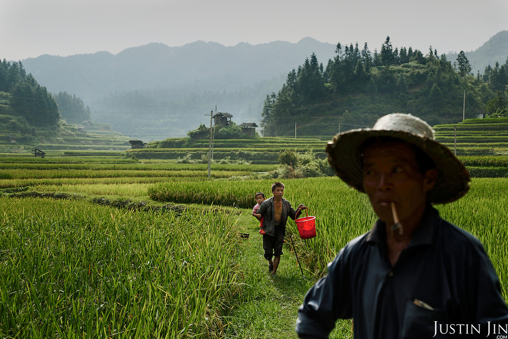 A farmer carries a bucket with fish he caught in his paddy field.