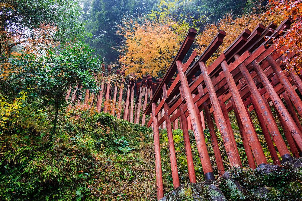 Hundreds of torii gates line the hillside at Yutoku Inari Shrine. Fushimi Inari in Kyoto is it's sister shrine – both dedicated to Inari.
