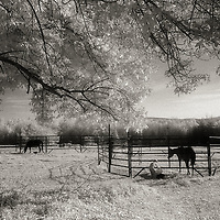Dad's farm in New Hampshire 2000 (Richard Charles Lippincott)