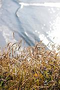 Mendocino Headlands State Park