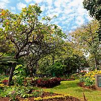 Europe, Portugal, Madeira. Funchal Municipal Garden.