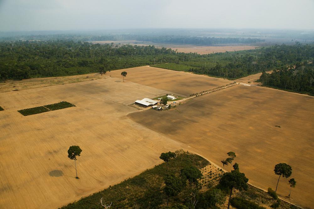 Dec. 6, 2003: A soy plantation on land that was formerly rain forest near Santarem in Para State, Brazil. ©Daniel Beltra