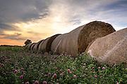 A landscape at sunrise of large haystacks