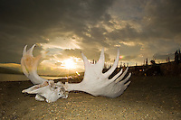 A rack from a long ago hunt decorates the shoreline at the moose camp.