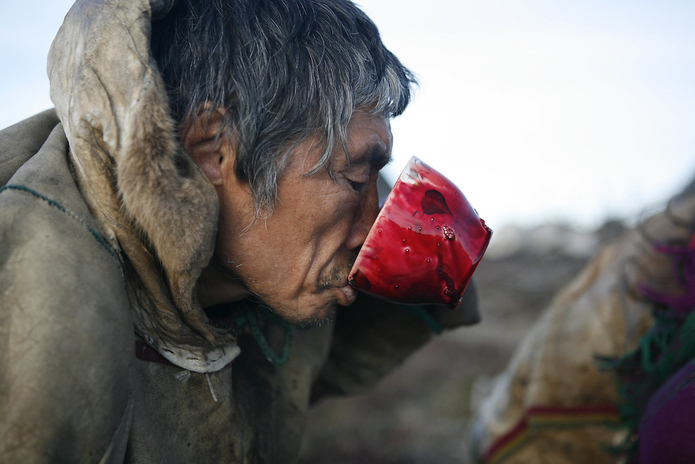 Sept 2009 Yamal Peninsula, Siberia, Russia - global warming impacts story on the Nenet people , reindeer herders in the Yamal Peninsula killing a reindeer for its meat and drinking the blood and eating meat raw
