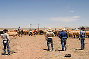 07 MAY  2004 -- WILLIAMS, AZ: Cowboys watch their friends work cattle in a corral  on the Willaha Ranch, north of Williams, AZ, May 7, 2004. The ranch is in the high desert country near the south rim of the Grand Canyon. The ranch is in the high desert country near the south rim of the Grand Canyon. Arizona ranchers are in the midst of a ten year draught that has dramatically reduced the size of their herds. At the same time, public consumption of beef has soared because of the popularity of the Atkins and other high protein diets, so while prices are up, herd yields are down because of the drought. PHOTO BY JACK KURTZ