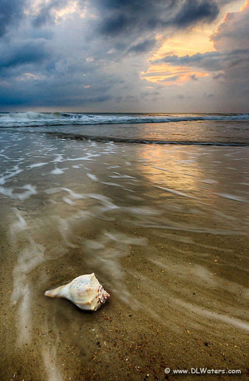 Dramatic photo of a Whelk shell on a Outer Banks beach.