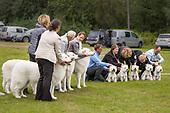 Trondheim Hundefestival 2017 Årsøya