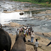 "PINNAWELA, OCTOBER-3 : a Sri lankan family admires the arrival of the elephant herd at the Ma Oya river in the morning in Pinnawala, October 3, 2005, Sri Lanka. Although the Elephant orphanage is state sponsored, a free tourist industry has developped around the orphanage. "" After the Tsunami the village was deserted until April "", says a local hotel owner. "" It was terrible "", adds a shop owner ."" We barely managed to survive"". According  to a report , even the orphanage encountered problems as the government needed funds to help the tsunami victims. Usually there are up to 800 visitors on weeksends during the season, while on working days there can be a dozen up to 200.PINNAWELA, OCTOBER-3 : an elephant greets a visitor   in Pinnawela, October 3, 2005, Sri Lanka.   .The Pinnawela orphanage was started in 1975 and initially designed to afford care and protection to the many baby elephants found in the jungle without their mothers. In most cases the mother either had died or been killed. .Animals are allowed to roam freely duringthe day and a herd structure allows to form. there are only a few elephant orphanges worldwide. At Pinnawela an attempt was made to simulate, in a limited way, the conditions in the wild. Currently the herd consists of 75 elephants under the surveillance of legendary  Mahout chief Sumanabanda."