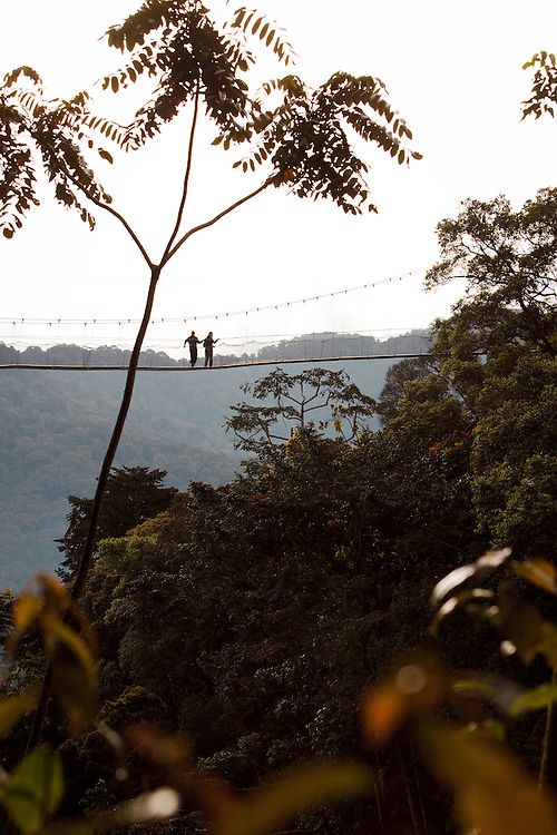 Writer Antonia Windsor tekking on tree top canopy walk, Nyungwe Forest, Rwanda