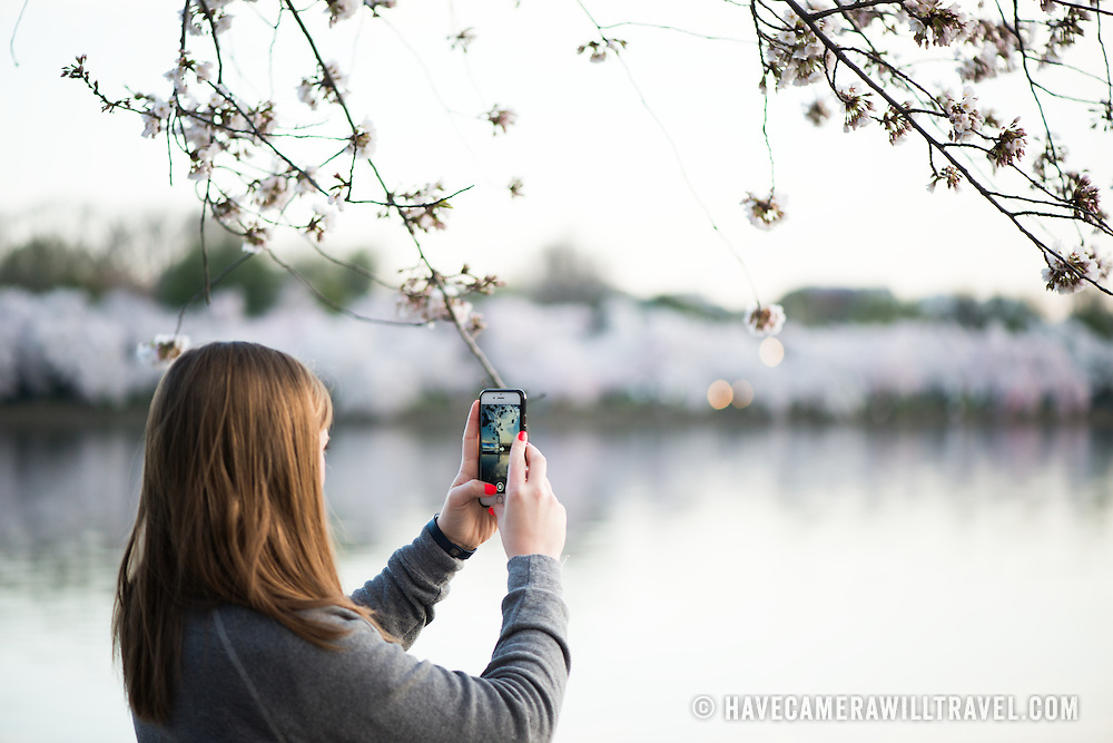 A woman takes a photo with her smartphone of the cherry blossoms blooming around the Tidal Basin in Washington DC.