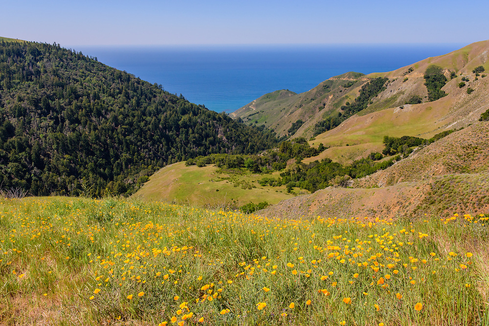 Los Padres National Forest, Big Sur, California