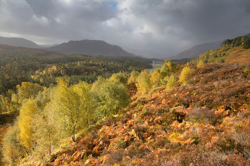 View looking west along Loch Affric to Kintail hills, Glen Affric NNR, Scotland.