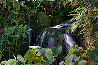 Waterfall in Farichild Tropical Gardens in Miami