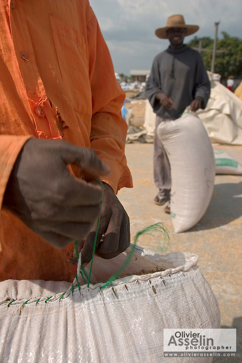 Workers opening bags of rice before pouring their contents to dry at Asutsuare, Ghana.
